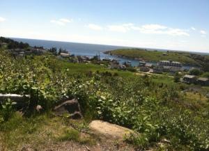 View of Town of Monhegen